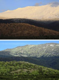 Aniversario de la Sierra del Guadarrama En primer término el Robledal, en un nivel superior, el pinar, y por encima las cumbres despojadas de masa arbórea en su vertiente segoviana. Arriba, imagen tomada en Marzo de 2014, abajo, la misma toma en mayo de 2014.