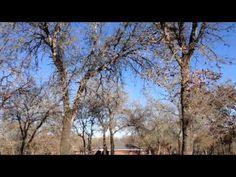 Police Chopper Harassment - YouTube