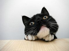 I love this kitteh's face!!