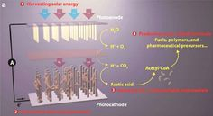 Artificial photosynthesis breakthrough turns emissions into plastics and biofuel Renewable Energy, Solar Energy, Water Energy, Green Chemistry, Organic Molecules, National Laboratory, Material Science, Thing 1, Sustainable Energy