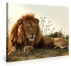 MAJESTIC LION - Premium Canvas Art Print - 40x30 inch Large Animal Wall Art Deco - Canvas Picture Stretched on Wooden Frame as Modern Gallery Artwork / e3610