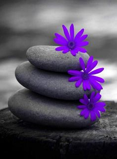 Purple daisy and stone
