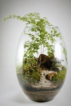 Indoor Water Garden, Eco Garden, Moss Garden, Indoor Plants, Terrarium Jar, Air Plant Terrarium, Garden Terrarium, Water Plants, Cool Plants