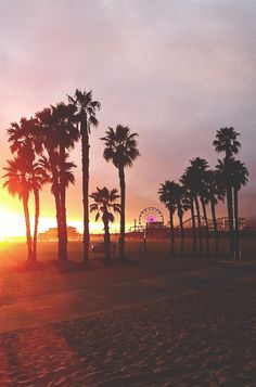 Venice Beach in Los Angeles. The City of Angels. Sunsets and Palm Trees are my favourite things ever. Places To Travel, Places To Visit, Photo Summer, Summer Beach, Summer Sunset, Sunset Sky, Pacific Coast Highway, City Of Angels, California Dreamin'