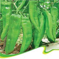 Best Garden Seeds Heirloom Organic Green Sweet Devil's Horn Pepper Seeds, Original Pack, 30 Seeds / Pack, Tasty Heirloom Vegetable Seeds