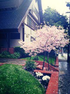 Berkeley in the rain <3 i took this pic haha