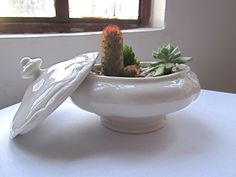 Terrario en cofre de porcelana