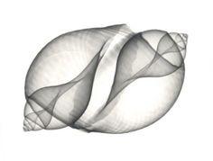 X-ray art by Albert Koetsier More Pins Like This At FOSTERGINGER @ Pinterest