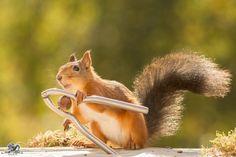 nature-animal-photography-backyard-squirrels-geert-weggen-10