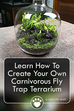 SerpaDesign shows us how to create our very own Venus Fly Trap terrarium. Wow your friends and kill off flying pests at the same time with this unique build. Terrarium Scene, Build A Terrarium, Hanging Glass Terrarium, How To Make Terrariums, Air Plant Terrarium, Garden Terrarium, Turtle Terrarium, Wall Terrarium, Orchid Terrarium