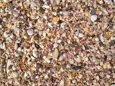 Sea shell beach sand