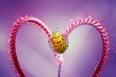 Endless love by Dewa Gsp on 500px