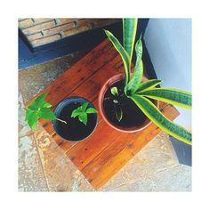 Um verdinho vivo e a casa se transforma em alegria! E quem pensou que o nosso banco em madeira não poderia compor um lindo cantinho verde BABOU na ideia!  Só amor!! by dcoratelie http://ift.tt/1qMomyv