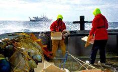 Big data helps scientists watch ocean plastic gyres form
