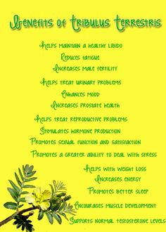 Health benefits of #Tribulus Terrestris. One of the amazing ingredients in LaVie™ wich was born from Mother Nature's most energizing, healthful and enchanting botanicals. To order go to www.nhtglobal.com/sandrabjork