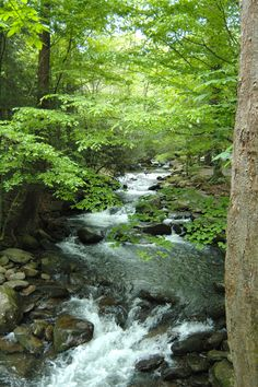 Peace can be found in the Smokies
