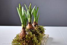 Dekorationer med mini påskeliljer