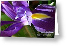 Purple Flag Greeting Card by Joan-Violet Stretch