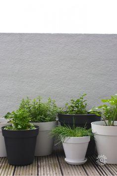 Mix of dark grey and white pots Balcony Plants, Balcony Garden, Garden Pots, Herb Garden, Love Garden, Dream Garden, Home And Garden, Outdoor Pots, Outdoor Gardens