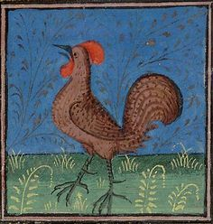 A crowing cock   Huntington Library, HM 27523, Folio 134r