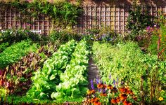 Top Secrets for a Continuously Productive Vegetable Garden – Gardening Steps