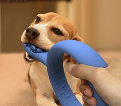 Toothbrush for your dog! It can be game and healthy...
