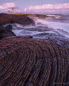 A beautiful swirl of pahoehoe lava and coconut trees along the Puna Coast in Hawaii's Volcanoes National Park. Photo by Floris van Breugel.