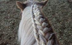 Znalezione obrazy dla zapytania fryzury końskie na zawody