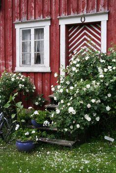 Rosa Alba Maxima - love the distressed wood siding and especially the chevron door