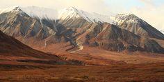 Fall colors in Denali National Park, Alaska by Alaskan Dude, via Flickr
