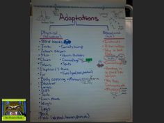 5th grade life science anchor chart for animal adaptations, sorting behavioral and physical adaptations.  Check it out at thepensivesloth.com.  #5thgrade #lifescience