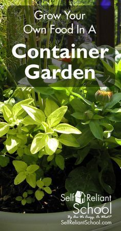 How to grow vegetables in a container garden if you don't have the room for a full-sized garden. #beselfreliant #Toolsforyourvegetablegarden