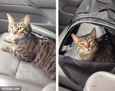 How it looked at me before and after going to the vet #9gag @9gagmobile by 9gag