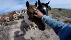 GoPro: Wild Mustangs - A Legacy in 4K. An amazing documentary about the last herd of wild mustangs and the people who try to preserve that.