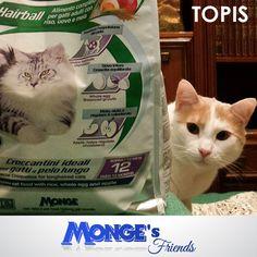 Topis  #Mongesfriends