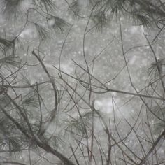 Just snow in the Pines..