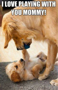 ♡ dogs - very cute!