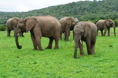 Poachers Aren't Going to 'Like' These Tech Companies Teaming Up to Fight the Ivory Trade World Elephant Day, Wild Elephant, Baby Elephant, African Elephant, African Animals, Ivory Trade, Save The Elephants, Wildlife Conservation, All Gods Creatures