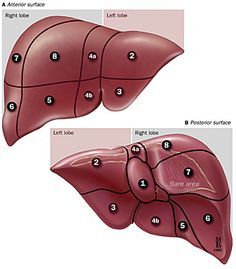 The phases of liver failure spelled out in clear to understand terms. Study and understand what is going on in each stage.