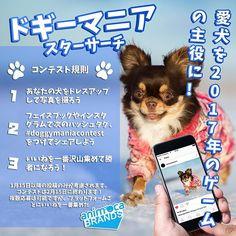 愛犬を2017年のゲームの主役に! 今日のドギーマニア スターサーチコンテストに参加しよう!勝者は私達の新しいゲームの主役になります!  Your dog can be a star in a game in 2017! Join us today with the Doggymania Star Search Contest! Winners will be featured in our new game!  #トイプードル #愛犬 #わんこ #いぬのいる生活 #日々 #暮らし #日常 #トイプードル部 #ふわもこ部 #癒しわんこ #秋田犬 #日本犬 #日本犬保存会 #かわいい #犬