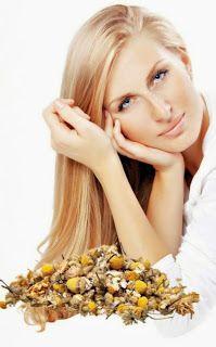 Chamomile tea benefits: treatments with chamomile tea