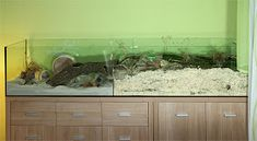 Naturnahe Hamstergehege: Doppel-AQ 200x40 für Robo Lily