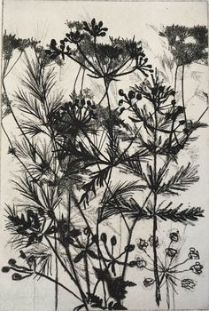 Buy Grasses, Etching / Engraving by Janet Sherwood on Artfinder. Discover thousands of other original paintings, prints, sculptures and photography from independent artists.