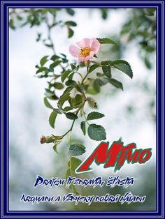 27.11 Mimo November, Plants, Blog, November Born, Blogging, Plant, Planets