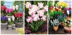 Korea Fashion, Garden, Plants, Recycling, Planters, Korean Fashion, Garten, Lawn And Garden, Gardens
