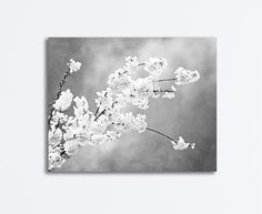 """Autograph of Angels"" Black & White Floral Photography Art by Carolyn Cochrane 