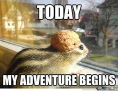Adventurer Squirrel