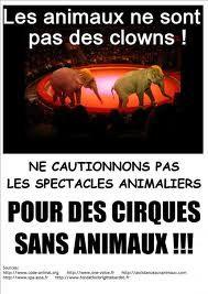 Défense des animaux de cirque : pour des cirques sans animaux !