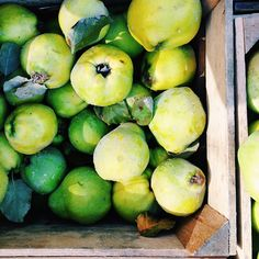 Box of #quinces at the Union Square Greenmarket in #Manhattan! Via allielewisclapp on Instagram #farmersmarketnyc