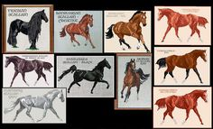 Horse Counted Cross-Stitch Patterns